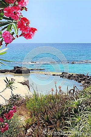 Marine lagoon and red oleander flowers