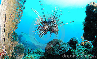 Marine life on ocean reef