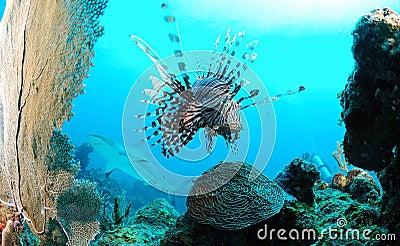 Marine life on ocean reef