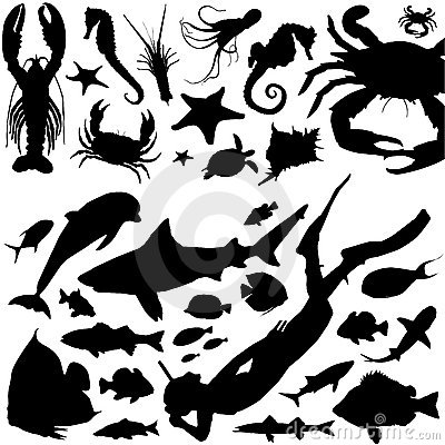 Free Marine Life Vector Stock Images - 6020934