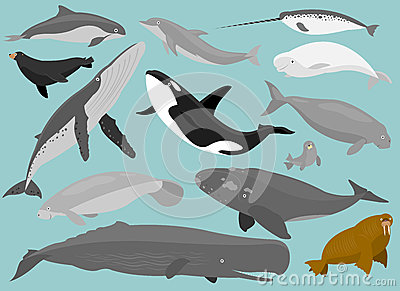 13 Marine Mammals in simplified flat vector cartoon including Porpoise ...