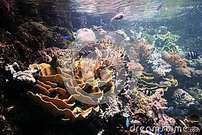Marine Organisms