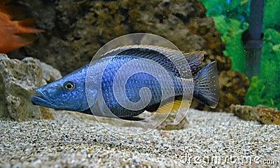 Marine pour des poissons d aquarium
