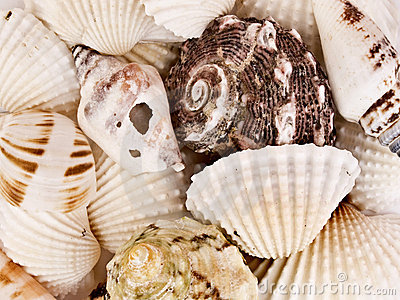 Marine shell background
