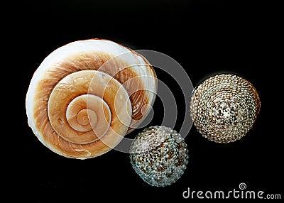 Marine Shells