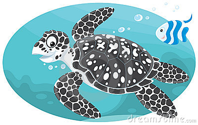 Marine turtle and coral fish
