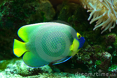 Marinefische