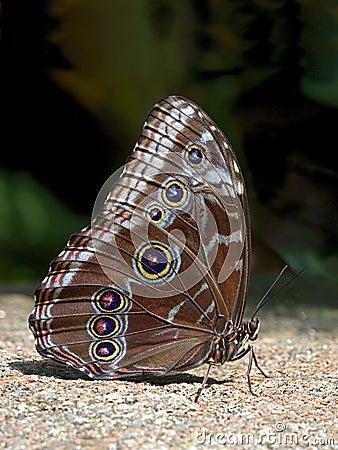 Mariposa en piedra
