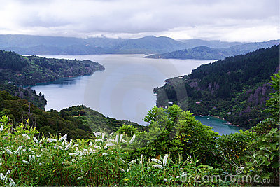 Marlborough Sound with hebe in the foreground
