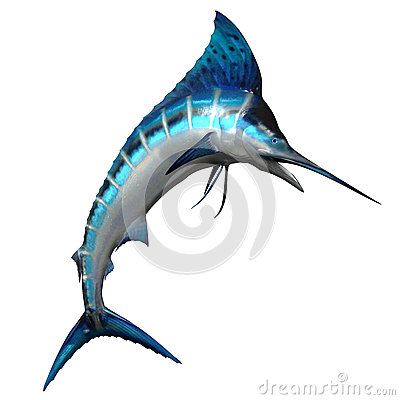 Free Marlin 02 Royalty Free Stock Images - 24866639