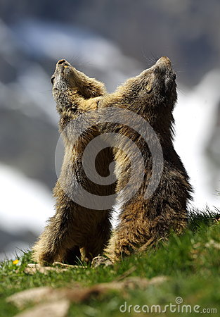 Marmot Games
