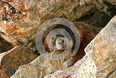 Marmot Rocks