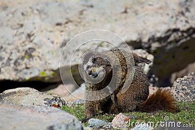 Marmot Yoga