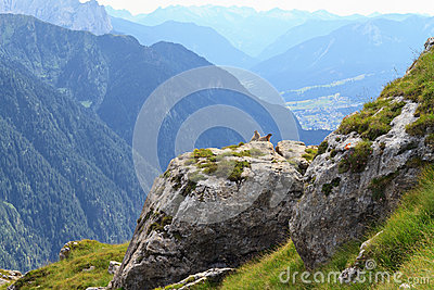 Marmots and Fassa Valley