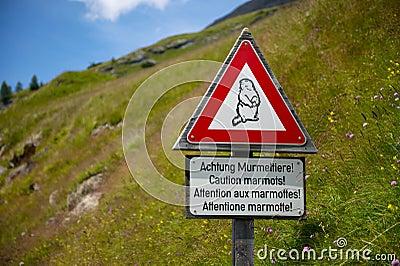 Marmotten