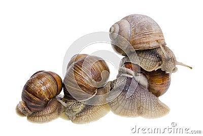 Marriage big snails games