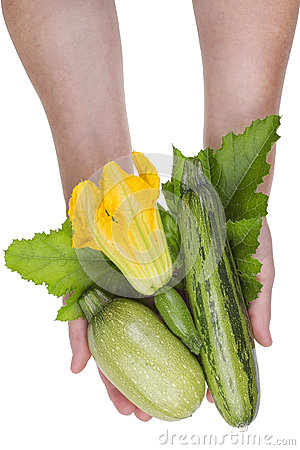Free Marrows In Hands Isokated Royalty Free Stock Photography - 57186307