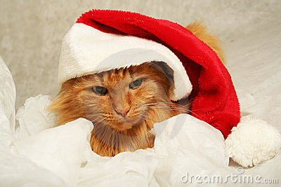 Marry christmas cat