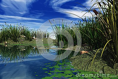 Marsh in 3D