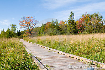 Marsh boardwalk in fall