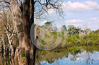 Marsh in Cambodia
