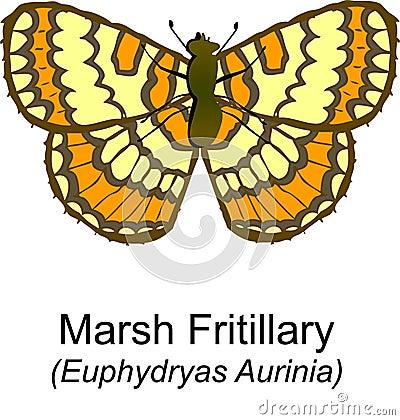 Marsh Fritilary