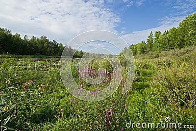 Marsh land vista
