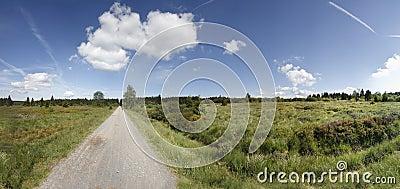 Marsh scenery