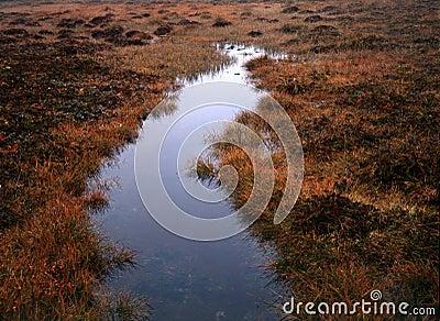 Marsh /swarm