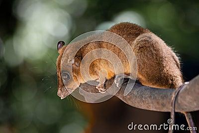 Marsupial named