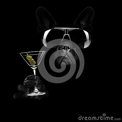 Free Martini Cocktail Dog Royalty Free Stock Photography - 96049707