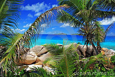 Marvellous beach with palm trees