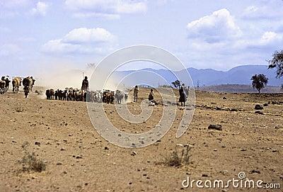 Masai herd