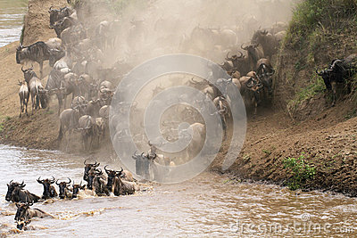 Masai Mara river crossing