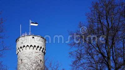 Massive old historic tower in Tallinn (Estonia) with a flagpole and the waving flag of Estonia on it. Blue cloudless sky and trees surrounding the scene stock video footage