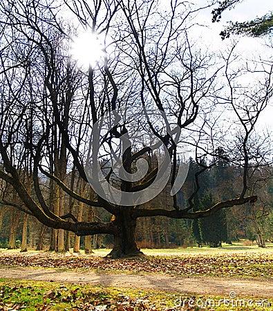 Massive Tree & Sunshine