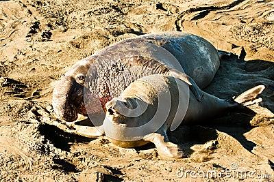 Mating Seals