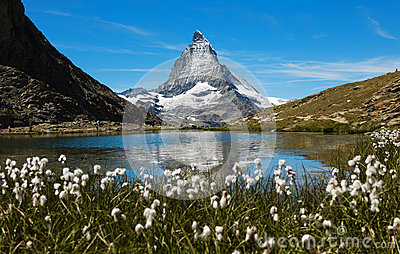 Matterhorn At Riffelsee Framed By Flowers