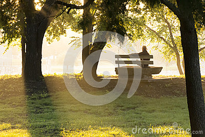 Mature Adult Male Sits Thoughtfully On Park Bench
