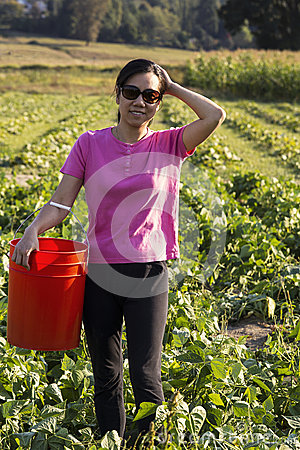 Mature Asian women collecting beans in Farm Field
