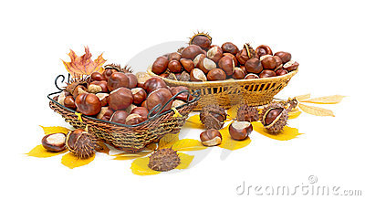 Mature chestnuts in wicker baskets.