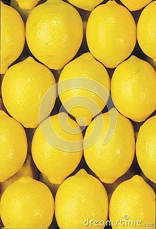 Mature group of lemons