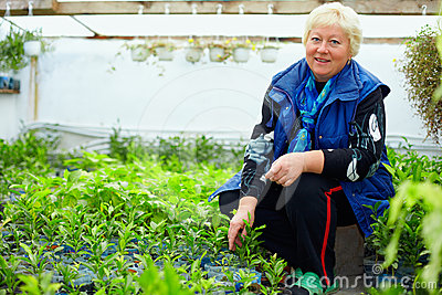 Mature smiling woman working in greenhouse