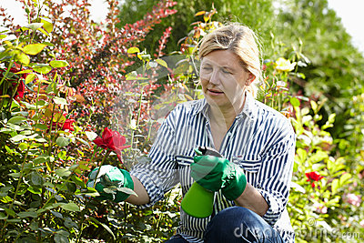Mature woman look after her garden