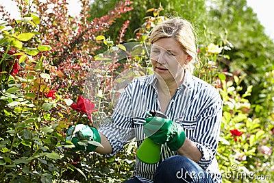 Mature woman look after her garden