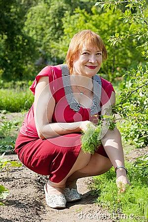 Mature woman  picking dill