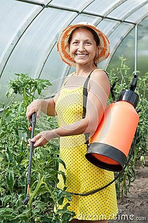 Mature woman spraying tomato plant
