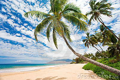 Maui tropical beach