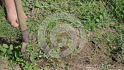 Mauvaises herbes de ver de houe de fille clips vidéos