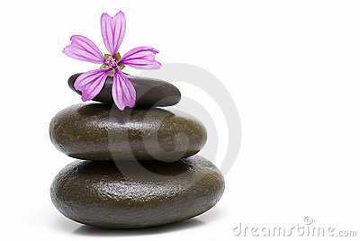 A mauve flower on three stones.